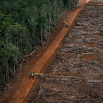 IPCC: Ander landgebruik cruciaal om klimaatcrisis te stoppen