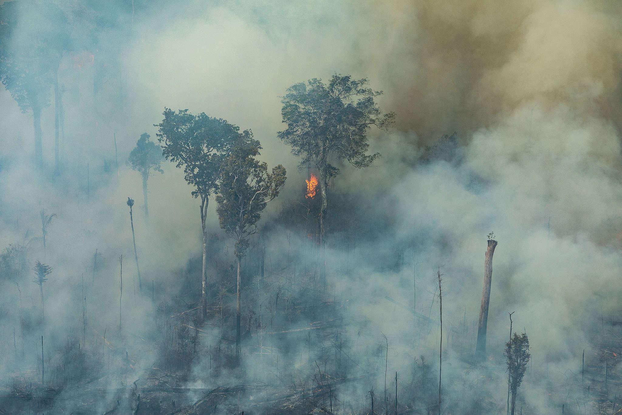 Branden in het Amazonewoud