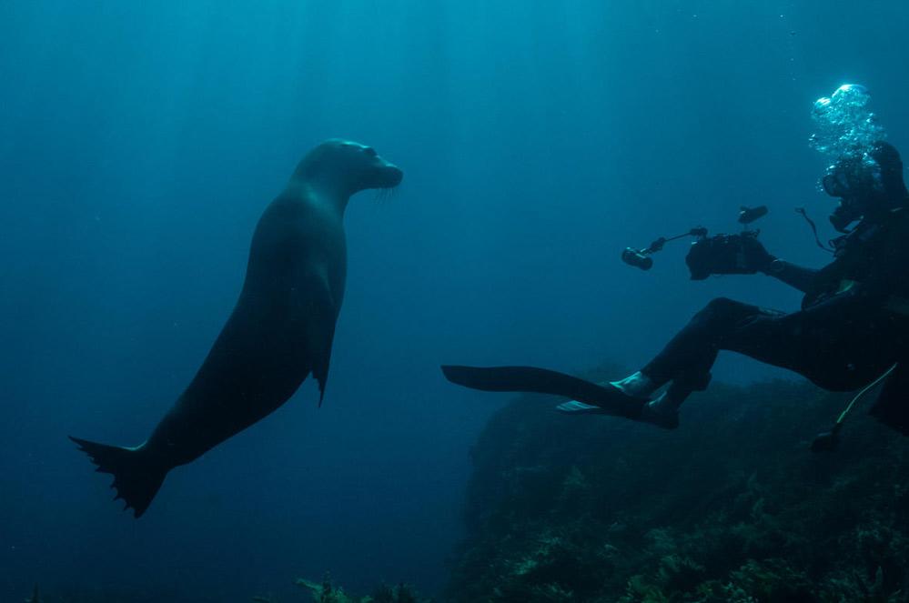 Wat leverden de VN-onderhandelingen over de bescherming van de oceanen op?