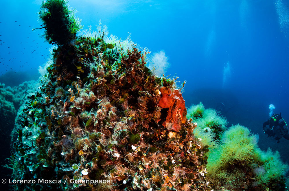 Seamount Vema