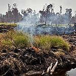 Palmolie: huishoudmerken blijven grote klimaatvervuilers