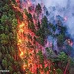 Briefing : une nouvelle législation européenne pour protéger les forêts dans le monde