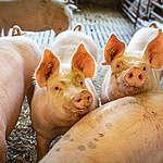 Europees Parlement tekent doodvonnis van kleinere boerderijen en natuur