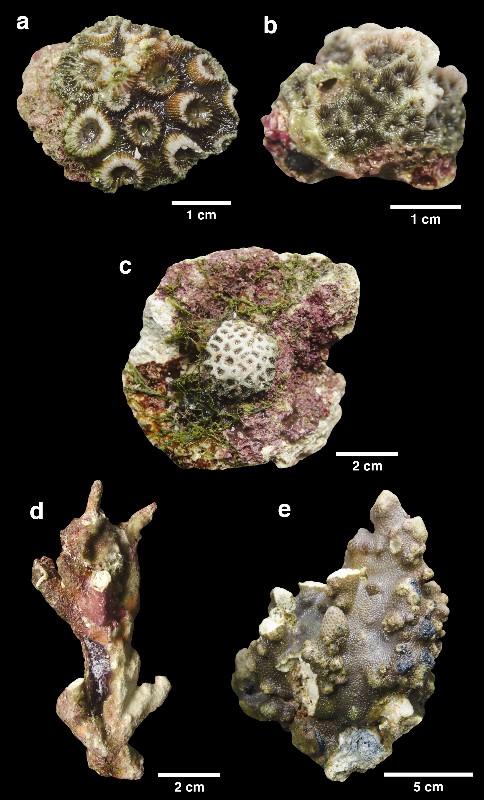 Alguns tipos de corais encontrados na região