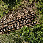 Vista aérea de extração ilegal de madeira.
