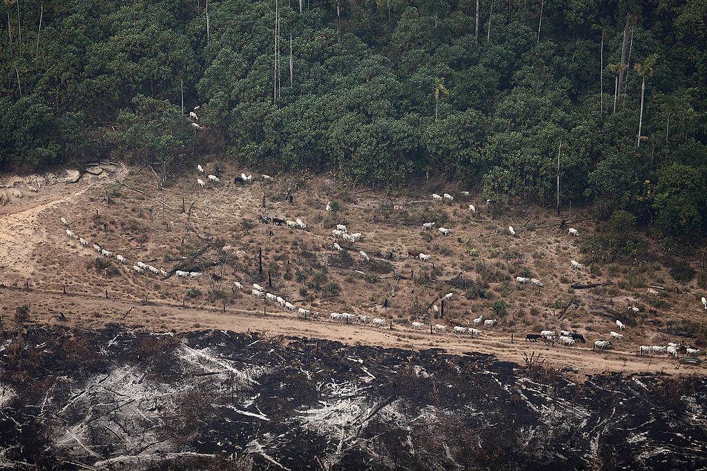 Vista aérea de região queimada ilegalmente na Amazônia.