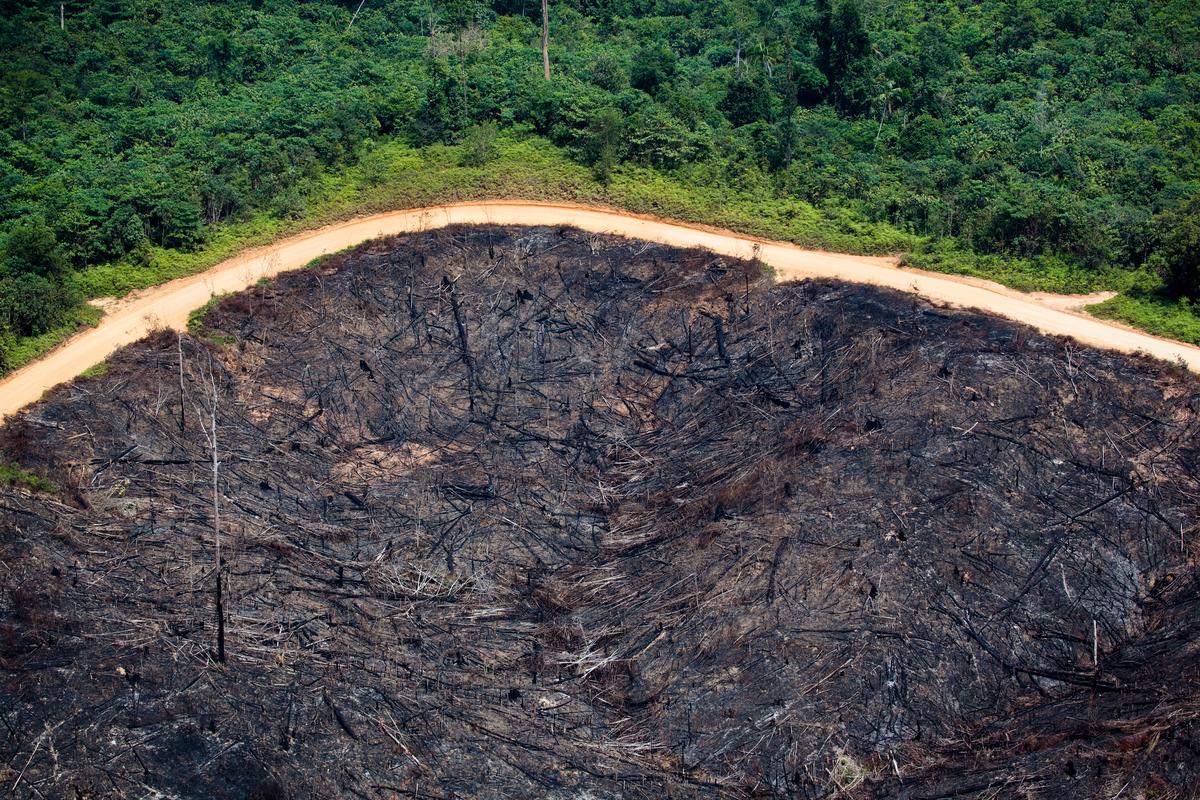 Grande campo desmatado em Sumatra © Daniel Beltrá