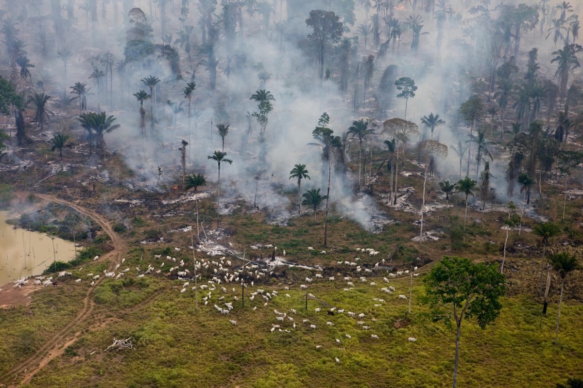 Floresta pegando fogo na Amazônia