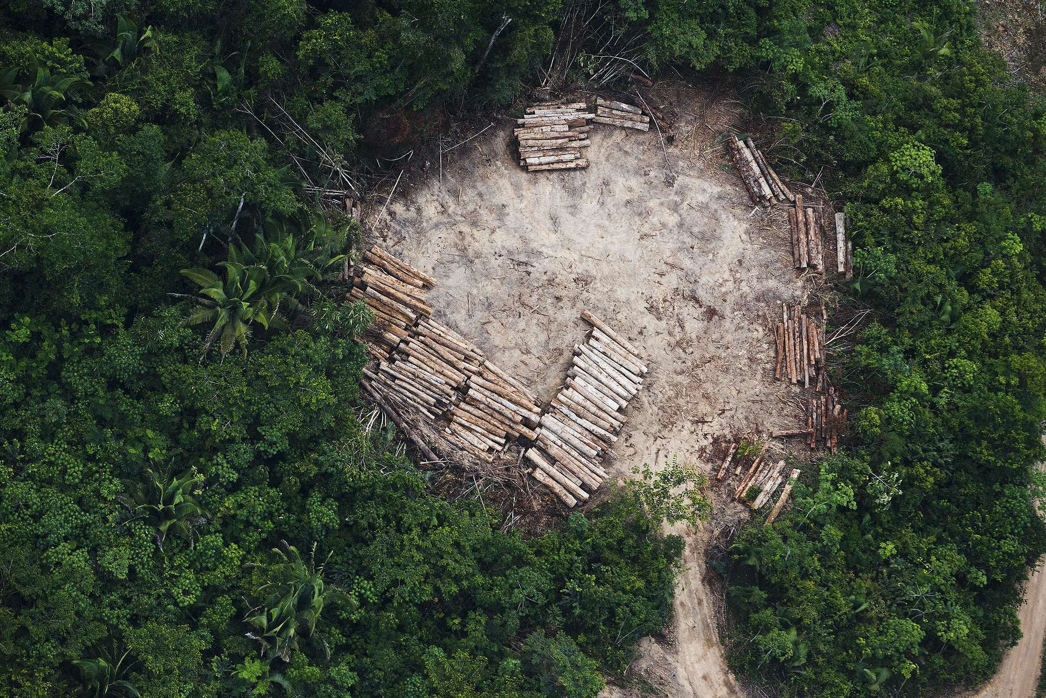 Desmatamento no Pará