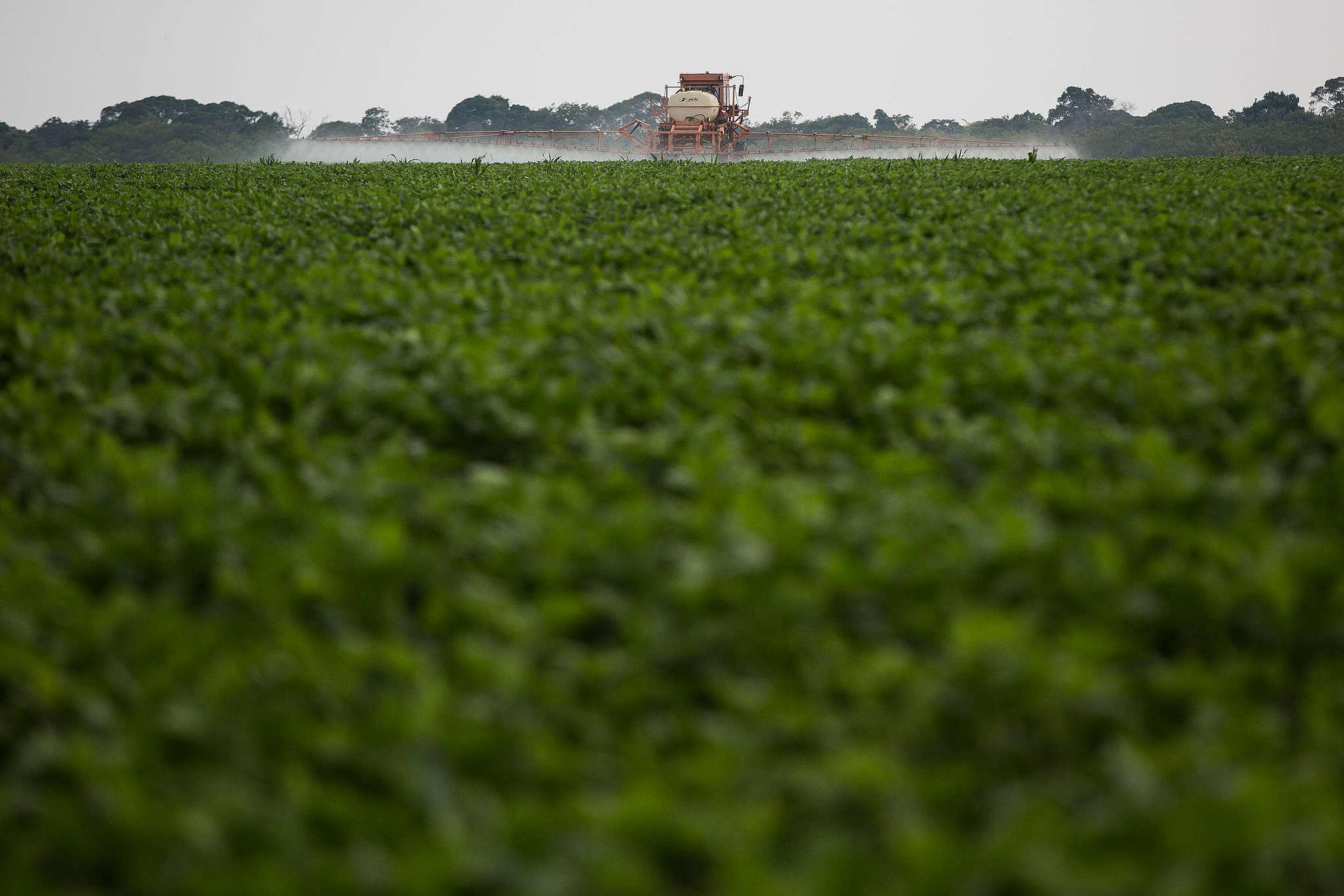 Lavroura sendo irrigada com agrotóxicos