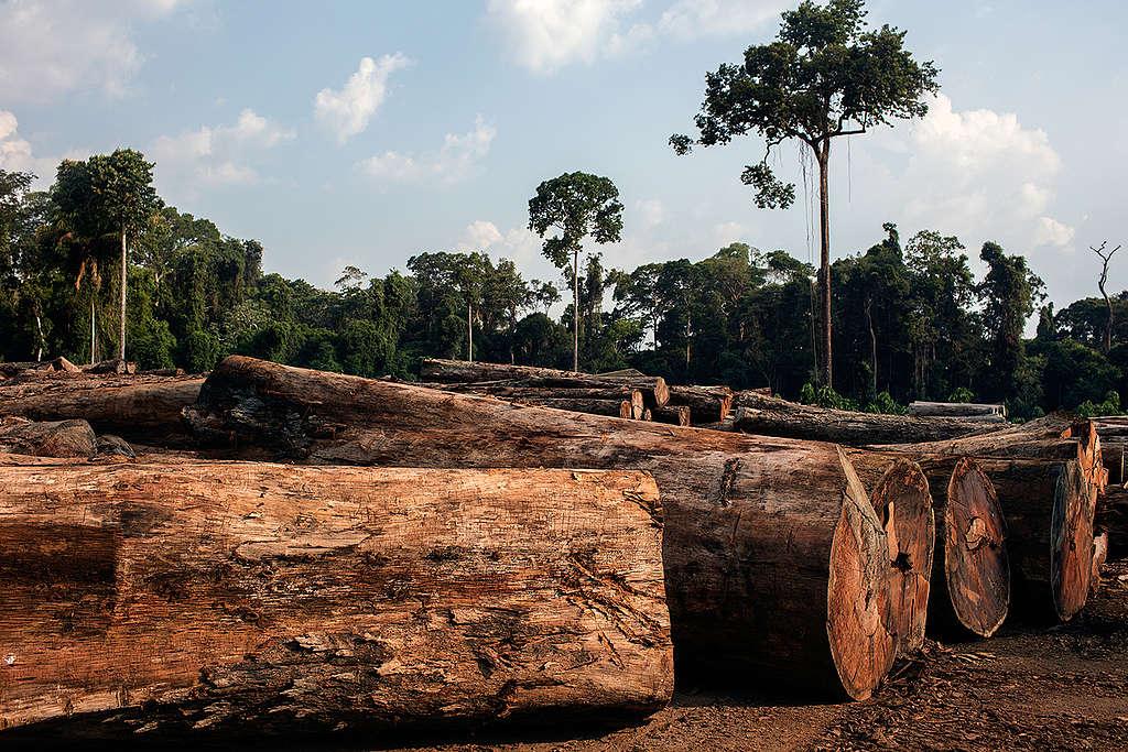 Toras de madeira provenientes de plano de manejo florestal no pátio de uma unidade de conservação.