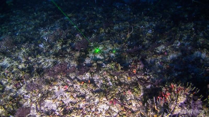 Primeiras imagens dos Corais da Amazônia registradas pelo submarino ©Greenpeace