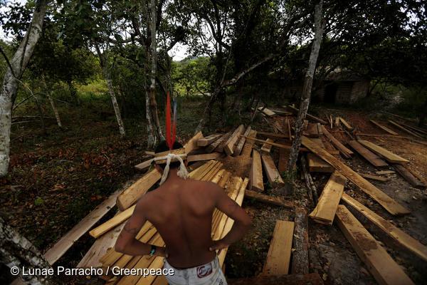 observa a madeira preparada para ser retirada ilegalmente de sua terra ancestral