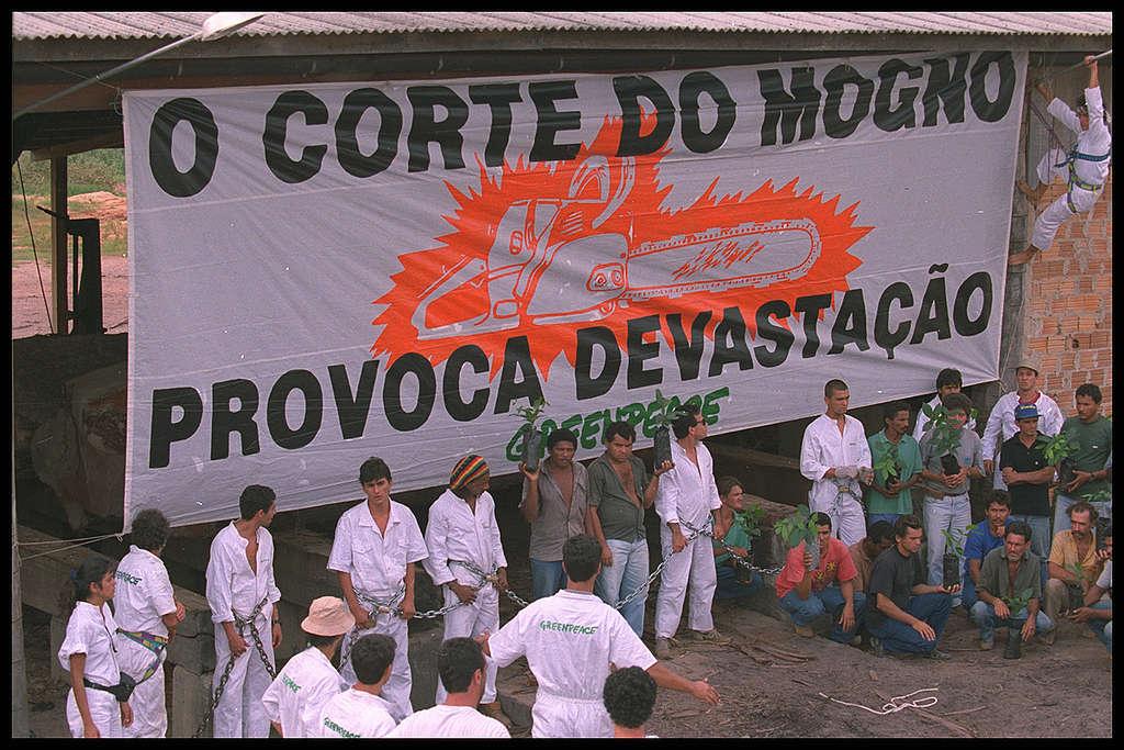 Ação contra a exploração de mogno em Rio Maria, no Pará.