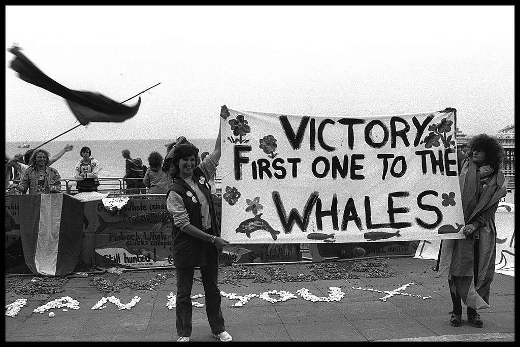 Ativistas seguram cartaz comemorando o fim da caça ilegal de baleias.