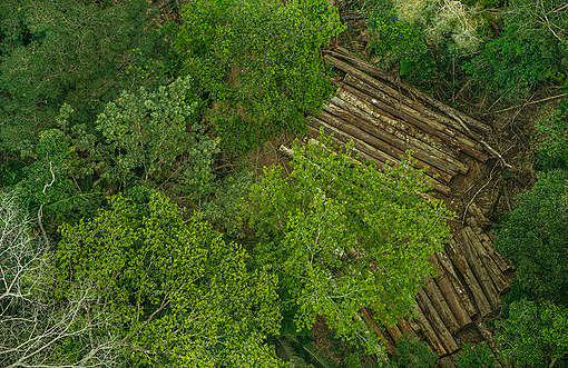 A invasão e o roubo de madeira na Terra Indígena Karipuna (RO) tem aumentado de modo vertiginoso