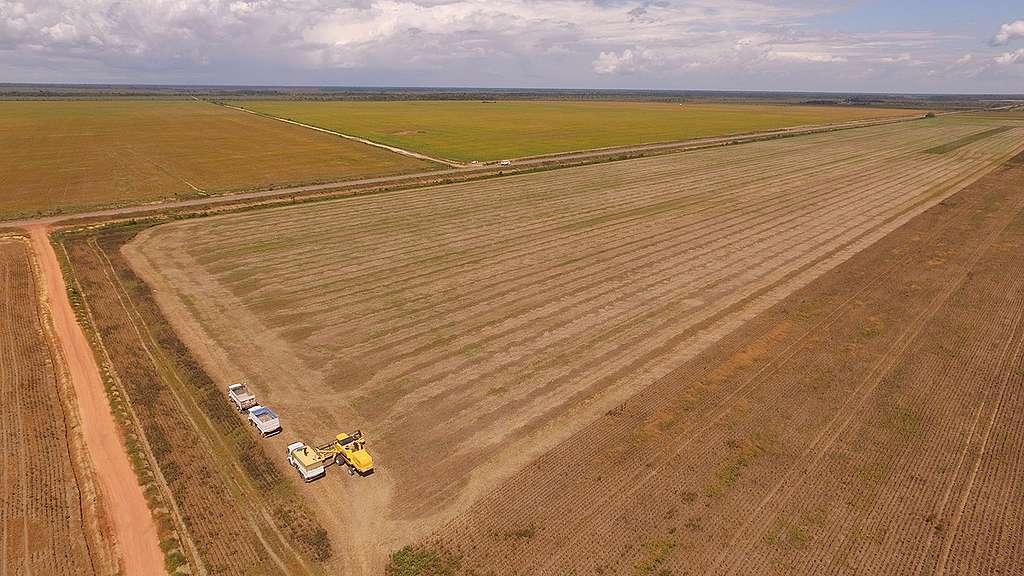 Plantação de soja no Cerrado do Amapá