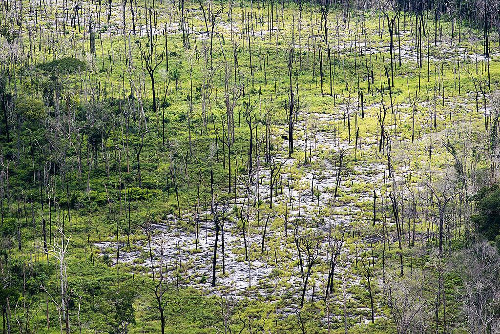 Floresta Nacional de Aripuanã. © Daniel Beltrá