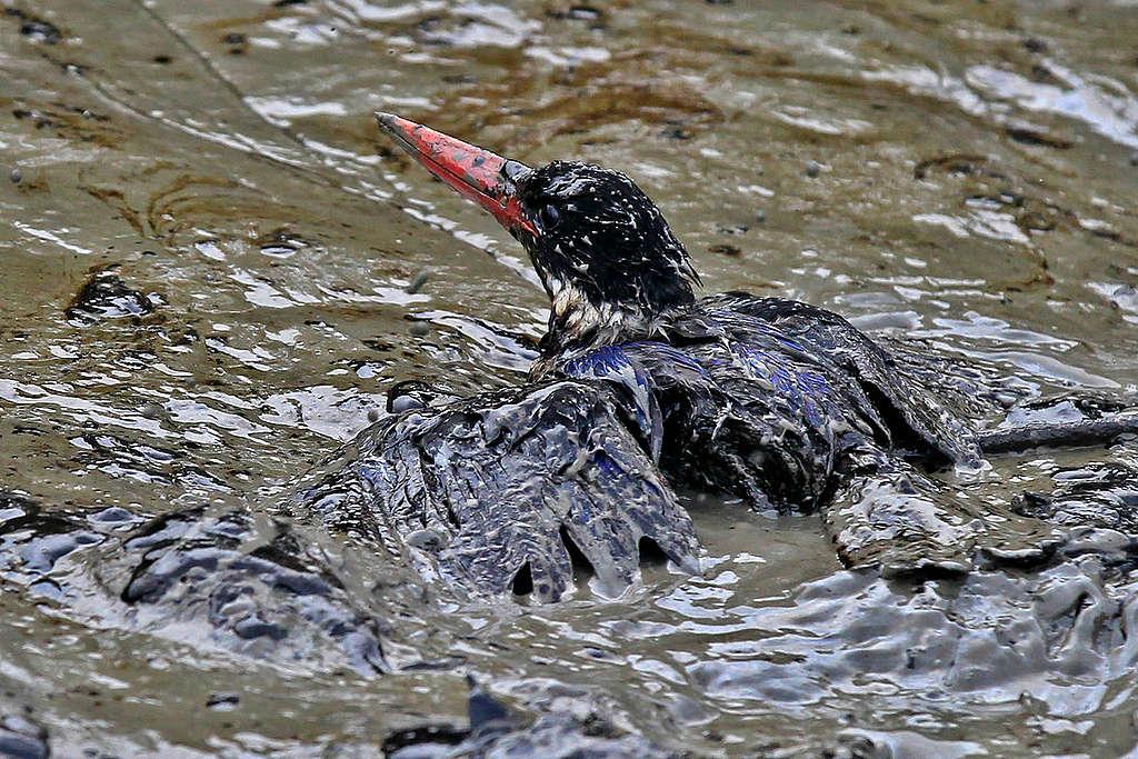 Pássaro coberto de lama e petróleo em rio.