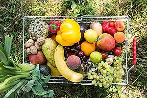 Cesta de frutas e legumes polinizadas por abelhas