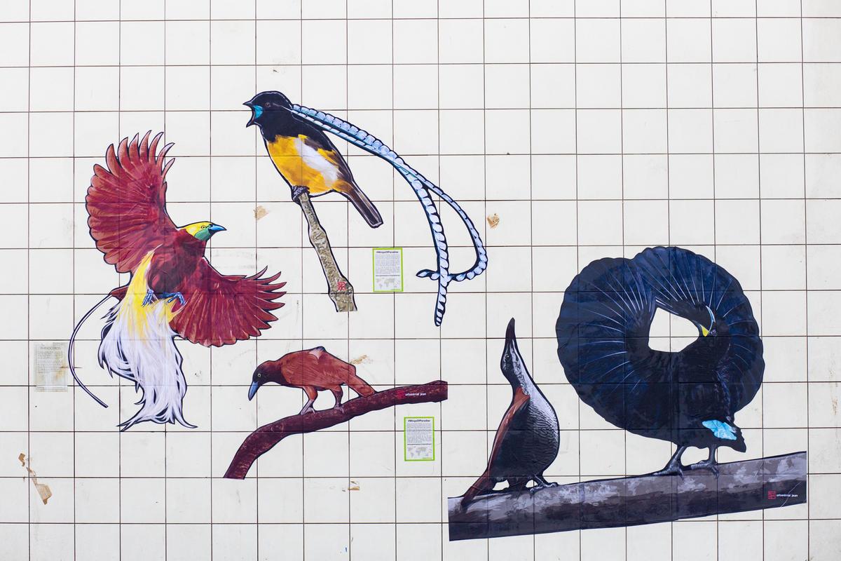 Mural na França com diferentes aves retratadas.