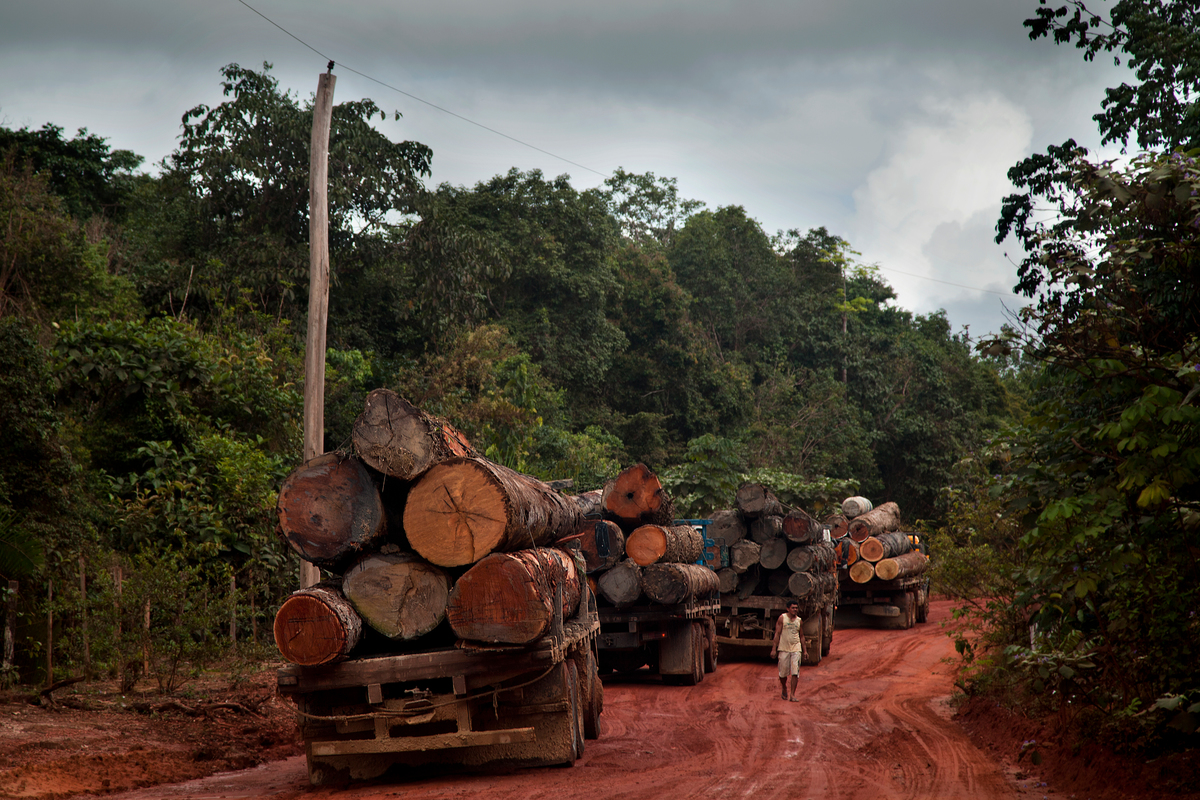 Caminhões carregados de madeira esperam embarcação para cruzar rio perto de Santarém, no Pará.