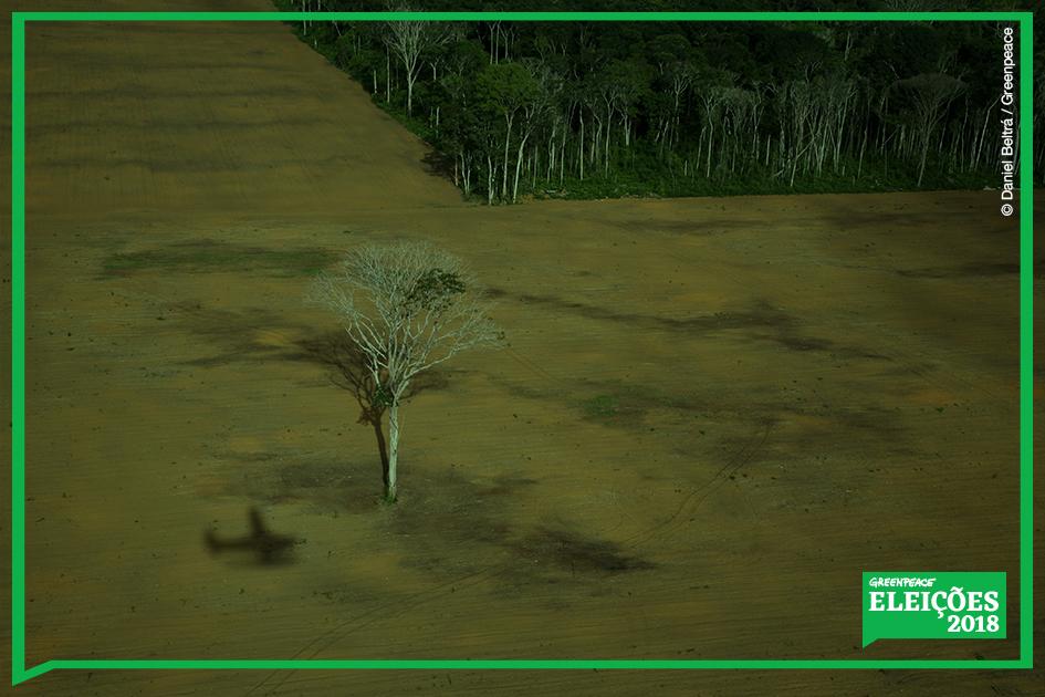 Desmatamento na Amazônia para produção de soja