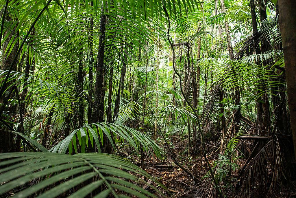 Floresta amazônica próximo ao rio Tapajós © Valdemir Cunha