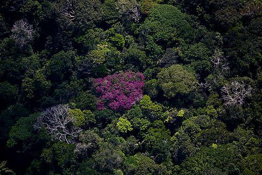 A Floresta Amazônica detém a maior biodiversidade do planeta e precisa ser protegida