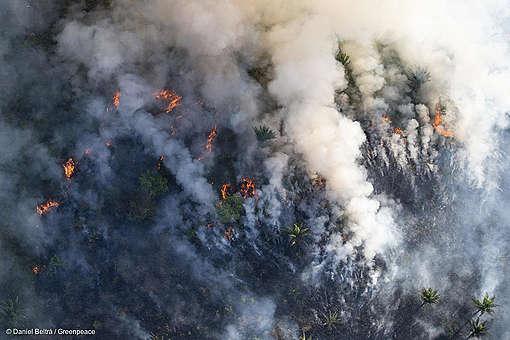 Fumaça sendo emitida pela floresta em chamas