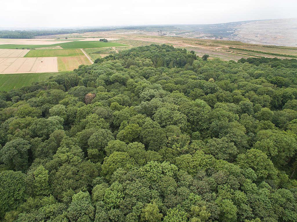 Imagem aérea da floresta de Hambach, em 2017.