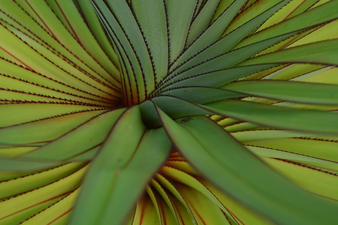 Folhas verdes aproximadas de uma bromélia