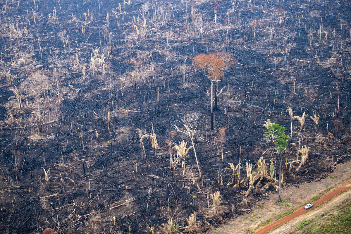 Incêndio Floresta na Amazônia 2018. © Daniel Beltrá