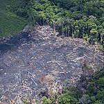 Desmatamento na Amazônia cresce 13,7%, o maior dos últimos 10 anos