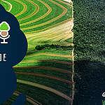 As Árvores Somos Nozes 05 – Como o agronegócio está destruindo o Cerrado