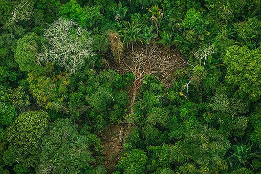 Desmatamento na Terra Indígena Karipuna (RO). © Christian Braga