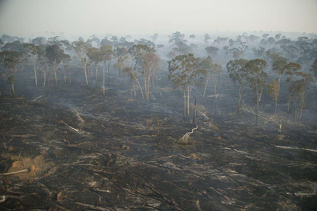 Área queimada de desmatada da floresta amazônica, no Pará © Daniel Beltrá
