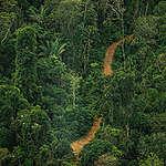 Estrada construída ilegalmente na TI Karipuna, para retirada de madeira.