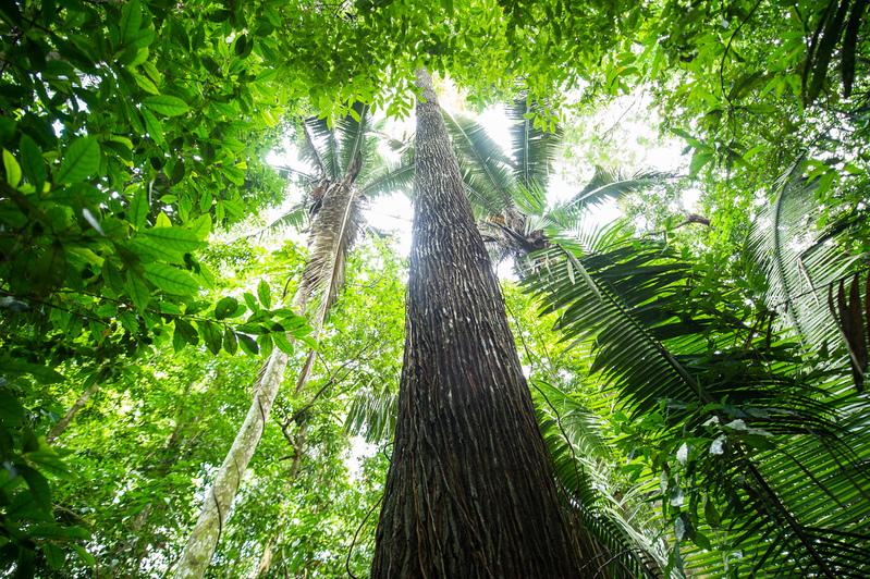 Floresta próxima ao Rio Tapajós, na região da Terra Indígena Sawré Muybu, do povo Munduruku, no Pará.