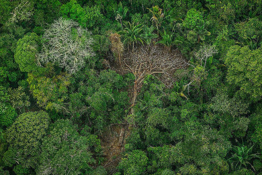 Povo Karipuna luta há décadas pela defesa da Amazônia