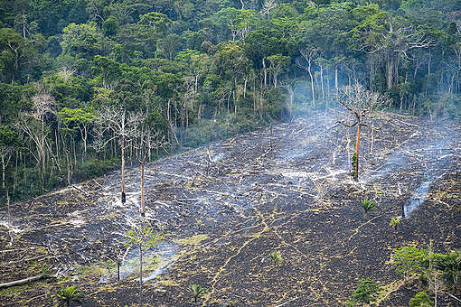 Estrago deixado pelas queimadas criminosas na Amazônia. Iremos cobrar do governo Bolsonaro a necessidade de proteger as florestas e agir para barrar as mudanças climáticas.