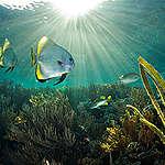 O caminho para a proteção dos oceanos
