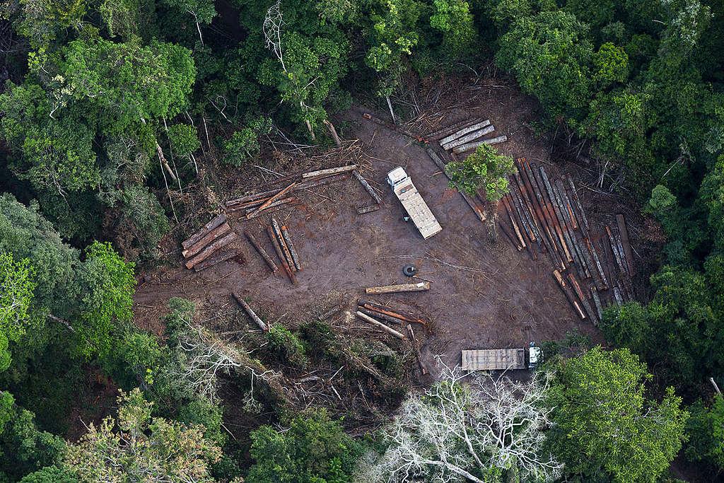 Desmatamento ilegal próximo a Santarém, no Pará