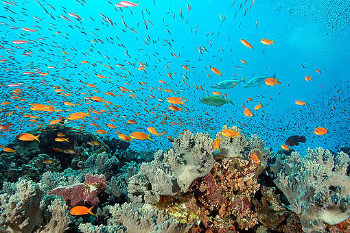 Samadai Reef - Red Sea Coastal Development in Egypt - 2006. © Greenpeace / Marco Care