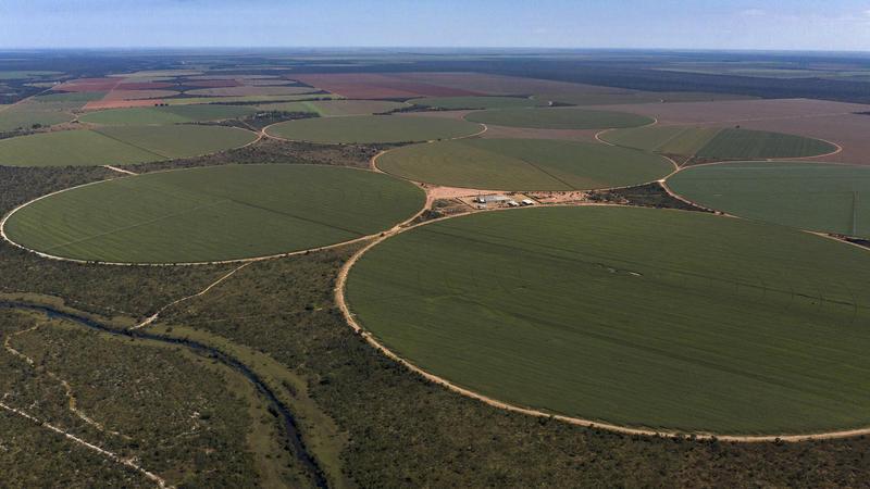 A monocultura de soja no Cerrado está acabando com a biodiversidade da região e ameaçando a sobrevivência de comunidades tradicionais.