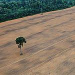 Governo Bolsonaro confirma agenda antiambiental e de destruição da Amazônia