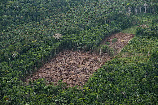 Floresta amazônica com área de desmatamento