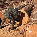 Ibama e Exército fazem novas apreensões na Terra Indígena Karipuna