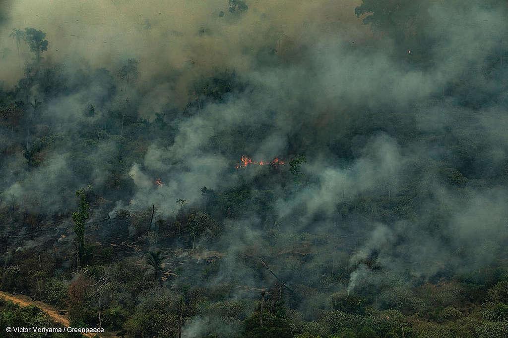 ALTAMIRA, PARÁ, BRASIL: Imagem aérea de queimadas na Serra do Cachimbo, REBIO (Reserva Biológica) em Altamira, Estado do Pará. (Foto: Victor Moriyama/Greenpeace)