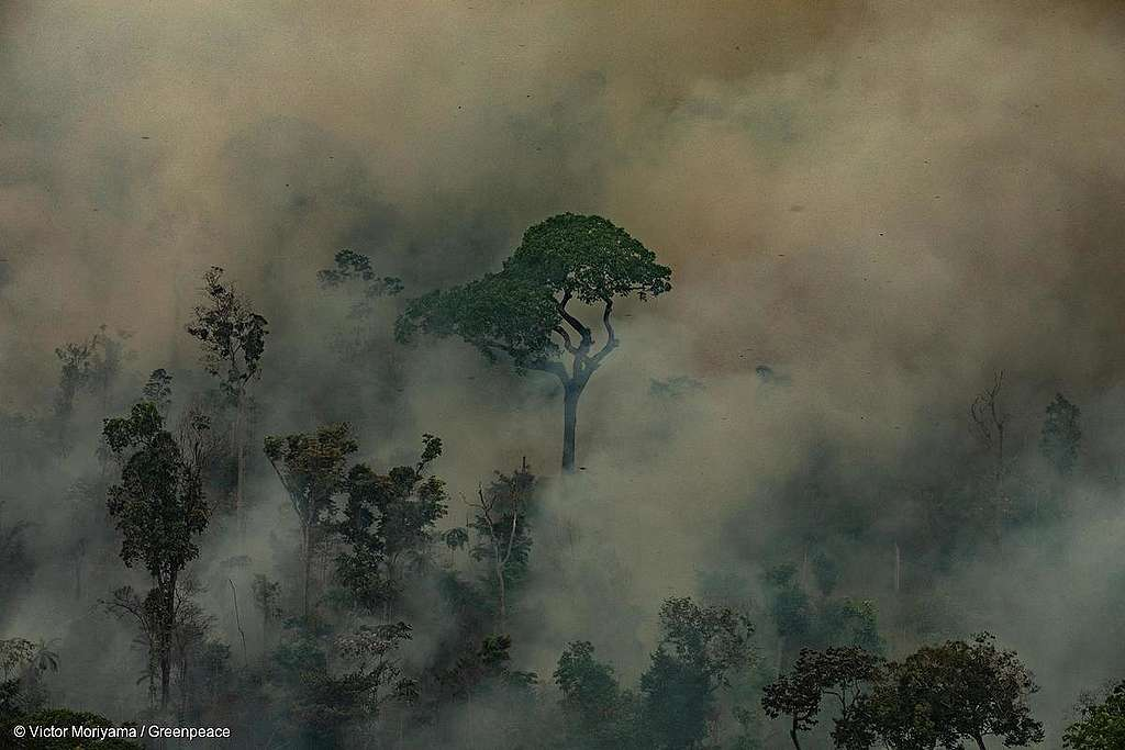 O Que O Greenpeace Está Fazendo Em Relação às Queimadas